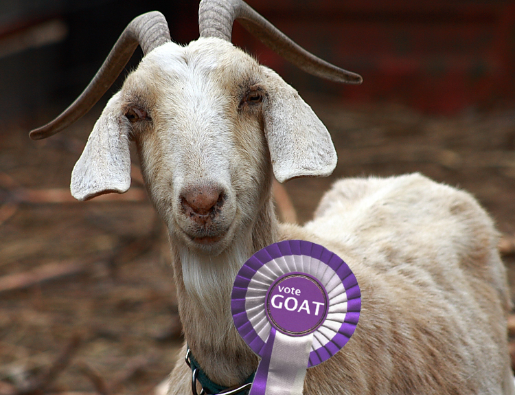 goat - the winning candidate