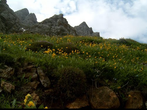 Iranian Meadow at Lash-e No_Alburz Mountains_Outside Tehran