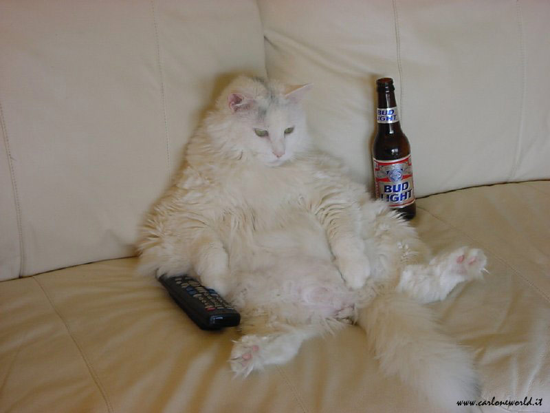 lazy cat with beer and controls