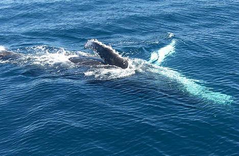 whale-162fv15