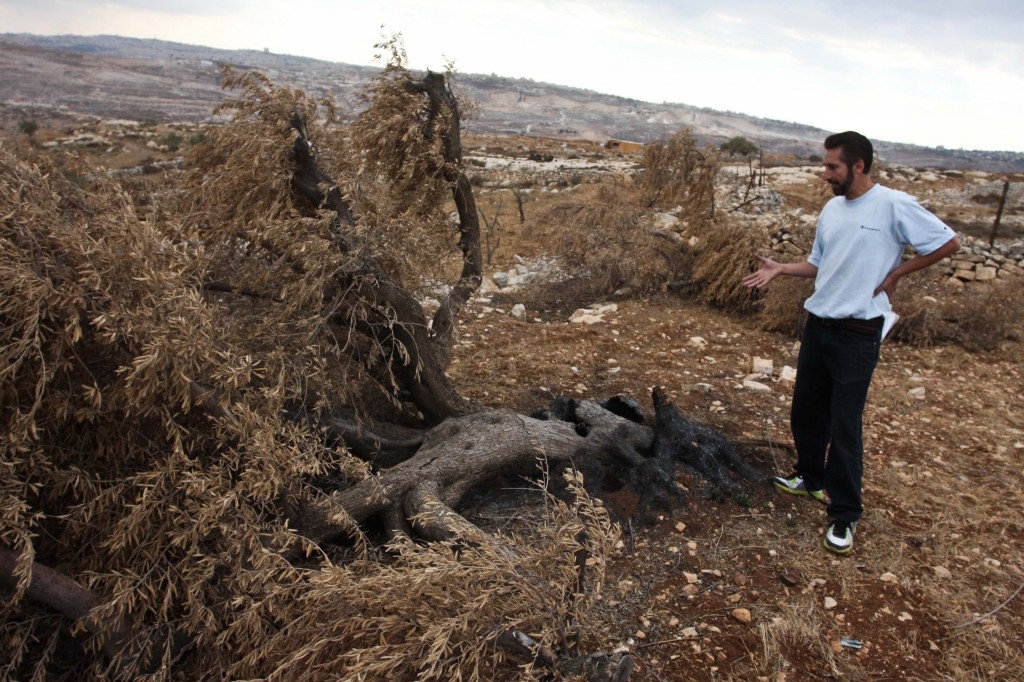 Palestinian farmer standing in his olive grove that was destroyed by Israeli settlers